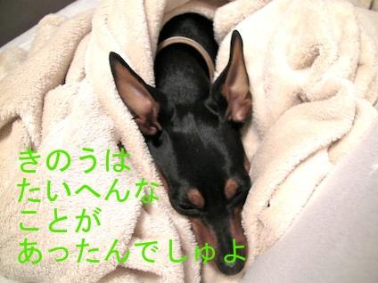 20110511.jpg