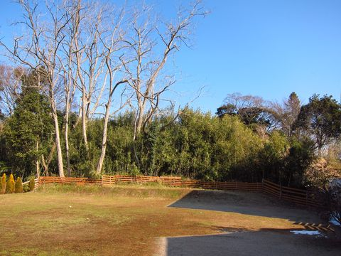20120128_03.jpg