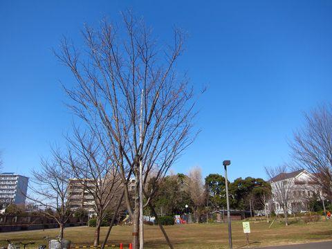 20120227_02.jpg