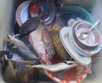 流しの魚たち