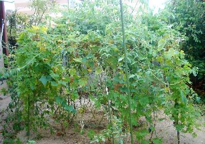 野菜の森2