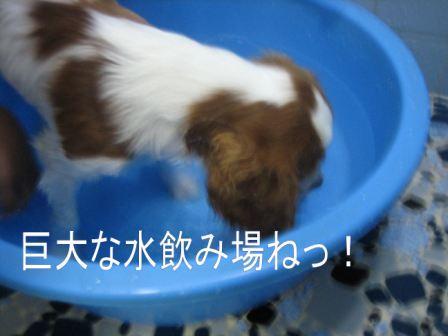 IMG_1172.jpg
