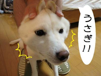 縺・&縺趣シ・シ\convert_20090821190306