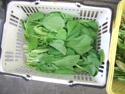 2009_0820チンゲン菜