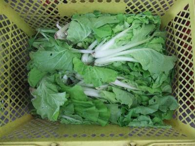 2009_0820山東菜
