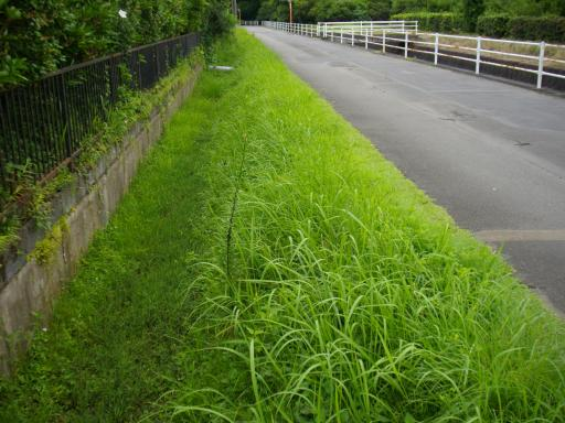 土手の草刈1