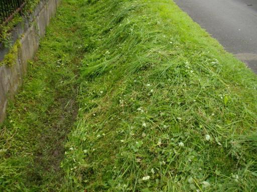 土手の草刈2
