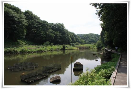 北口近くの池