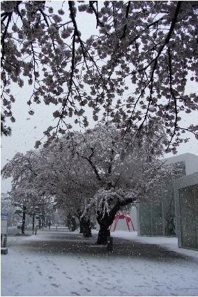 いまいつなの雪