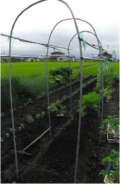 トマト屋根骨組み