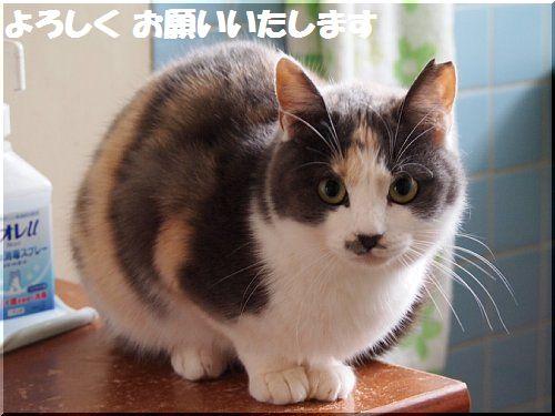 yorosiku04.jpg