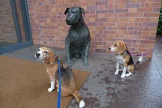 六花亭の犬とななしゅう