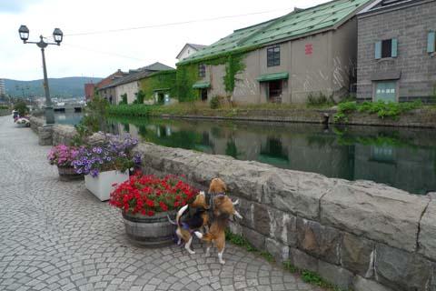 小樽運河ななしゅう