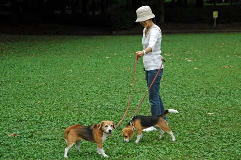 淵野辺公園の散歩
