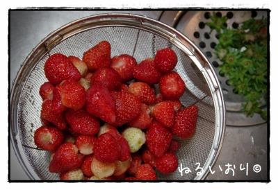 ichigo01.jpg