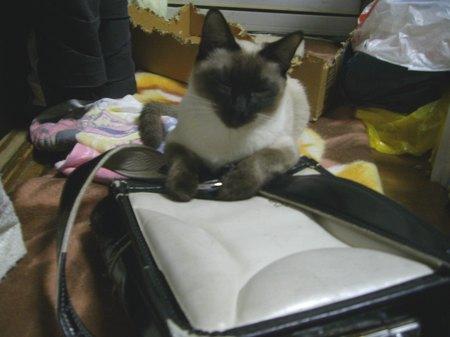 鞄はエースの物【09年1月25日】