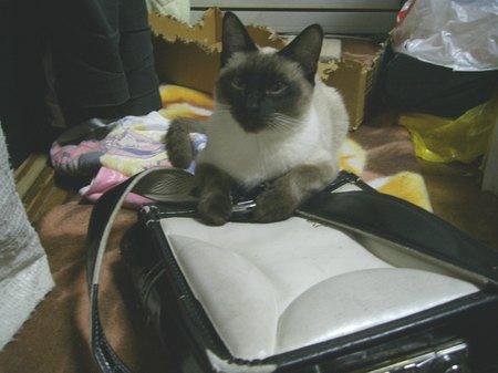 鞄はエースの物2【09年1月25日】