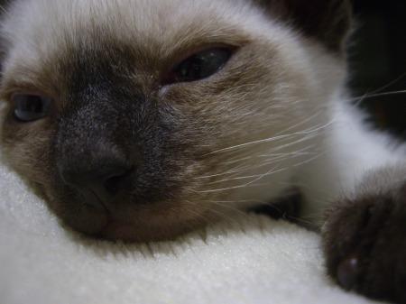 リキッド - 2009年5月10日