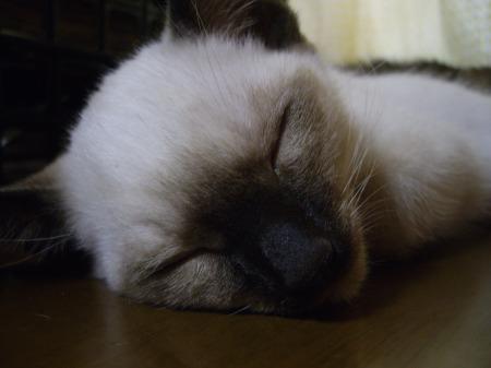 2009年5月31日 - リキッド枕
