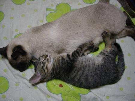 2009年5月17日 - 親子