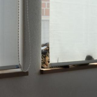 窓んとこのこっちゃん