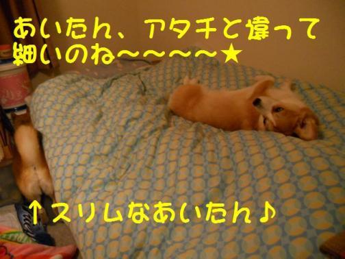 起きない犬も居るよ。
