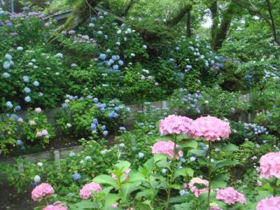 2009.6 矢田寺⑤