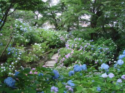 2009.6 矢田寺⑥