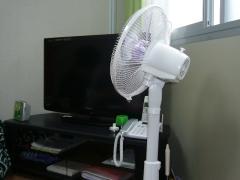 テレビ 扇風機