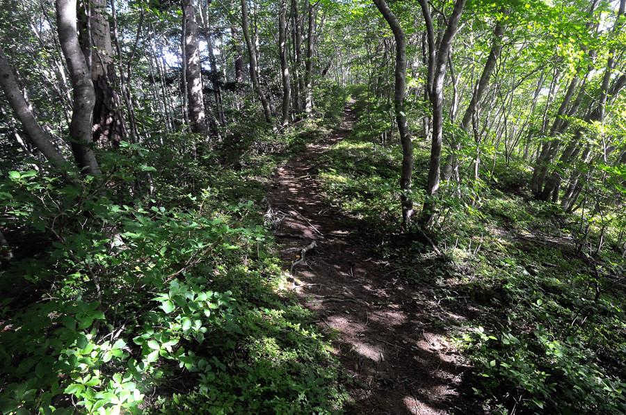 陽の光降り注ぐ林の尾根道