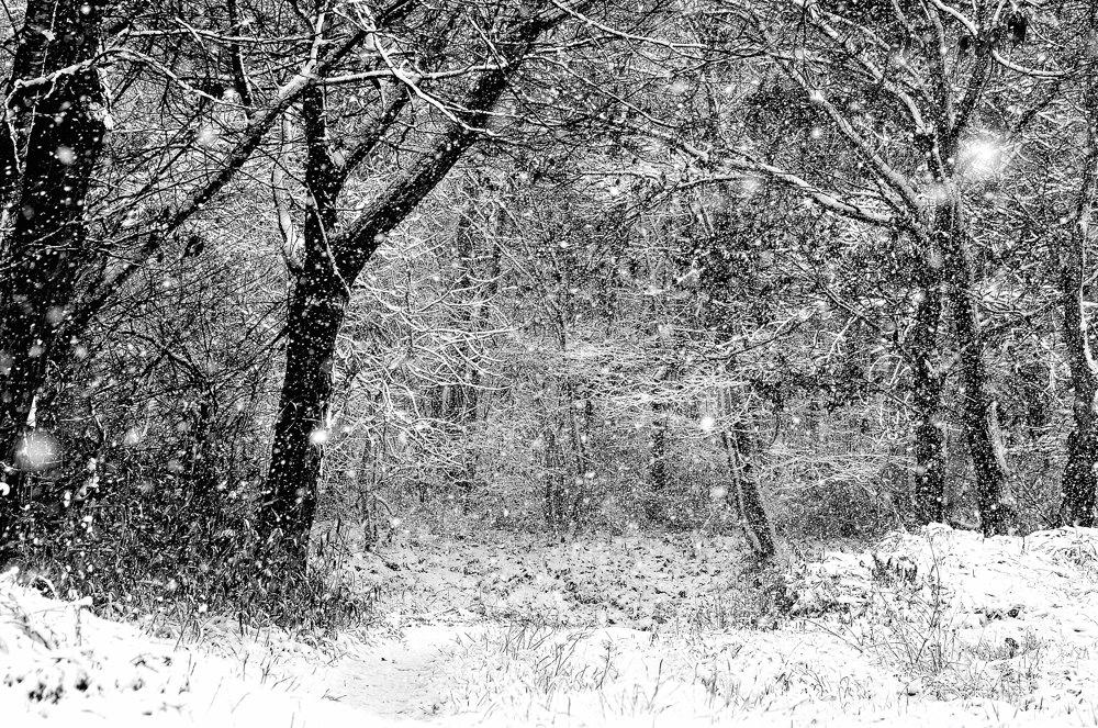 さんぽみち・冬