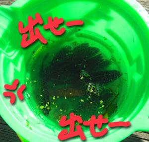 fishworms9.jpg