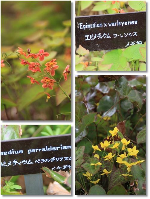 京都府立植物園 1