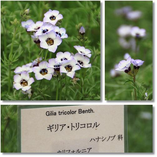 京都府立植物園 2