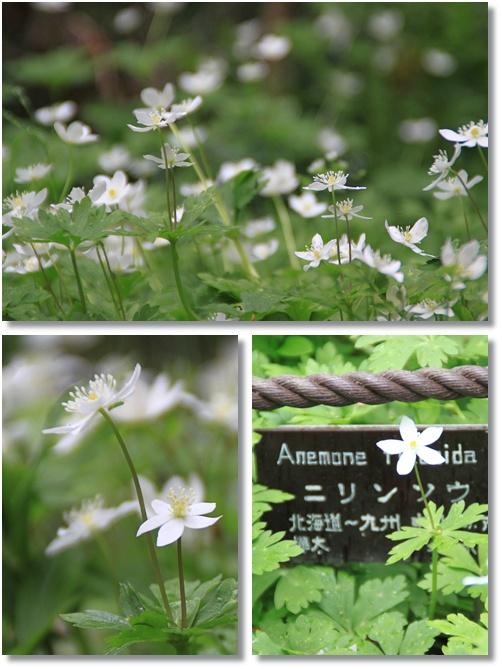 京都府立植物園 4