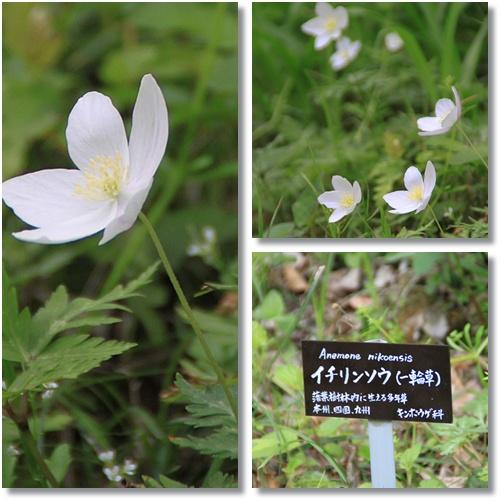 京都府立植物園 5