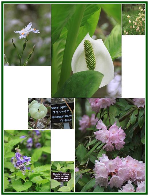 京都府立植物園 6