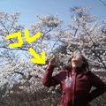 SAKURA_20090910112704.jpg