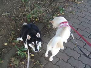 yuki&non