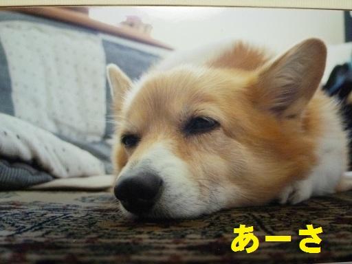 ahsa_20120108003936.jpg