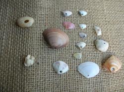 素材(2) 穴あきの貝がら