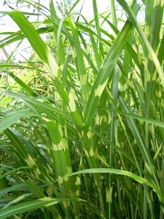 my-garden 032