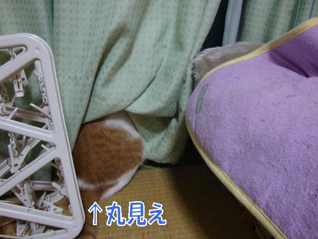 3_20090805101859.jpg
