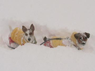 1_25_新雪の中のピートとリリィ