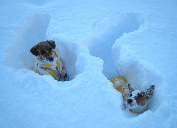 1_25_新雪に埋もれるピートとリリィ