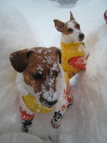 1_25_新雪の中のピートとリリィ 2