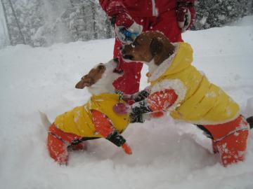 1_25_雪面でガウガウ
