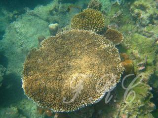 プーケット島 ピピ島 コーラル島 観光ツアー オプショナルツアー