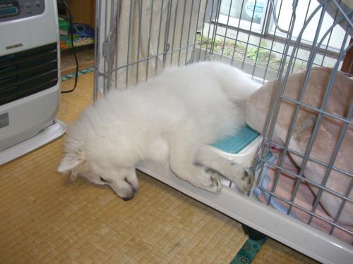 ピッピ爆睡