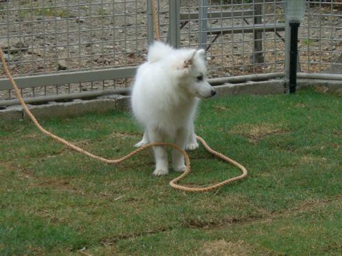 ピッピ 「あ ロープだ!」